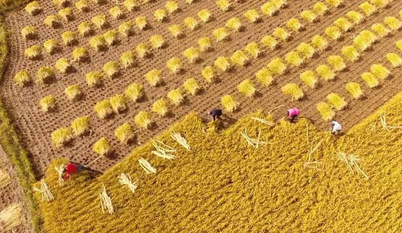 """阿里推出""""数字粮仓""""提升数字化农业发展"""